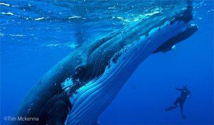 une superbe expérience a la rencontre des baleines de Madagascar.