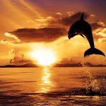 Déroulement Excursion Safari dauphins Nosy Komba Madagascar